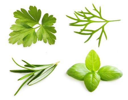 파슬리 허브, 바질 잎, 딜, 흰색 배경에 고립 로즈마리 향신료.