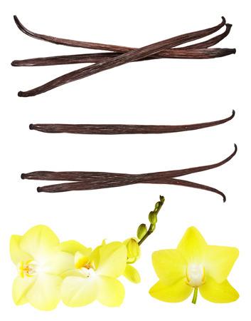 バニラのさやと白い背景に分離された蘭の花