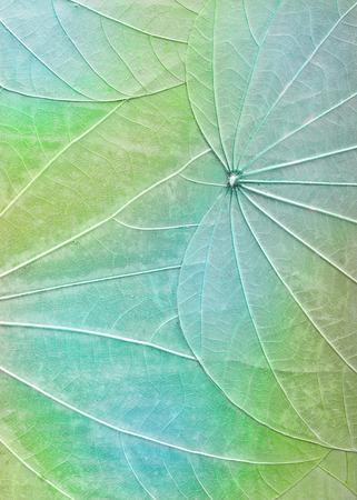 Macro dried leaves background texture Banco de Imagens