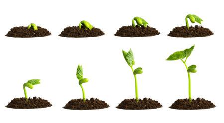 Groeiende plant in de bodem op een witte achtergrond. Stockfoto