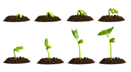 time lapse: Growing plant in soil isolated on white background.