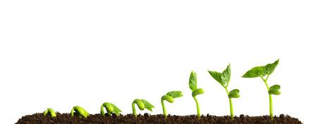 Pflanzen: Wachsende Pflanze im Boden isoliert auf weißem Hintergrund.