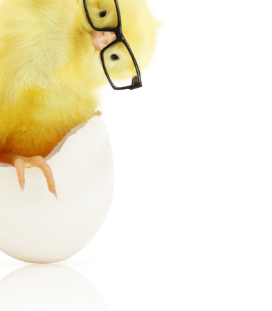 Cute little chicken in black eye glasses coming out of a white egg isolated on white background Foto de archivo
