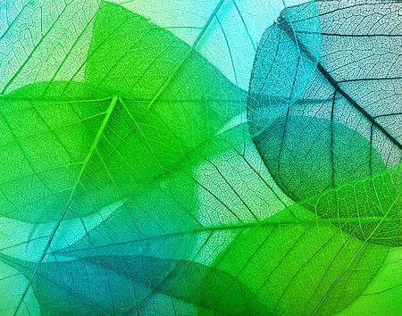 マクロ緑葉背景テクスチャ