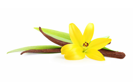 Vanilla pods and flower isolated on white background Stock Photo