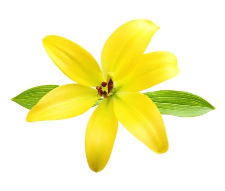 Flor de la vainilla aislados en el fondo blanco