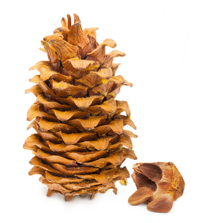 siberian pine: Cedar pine cone and nuts isolated on white background