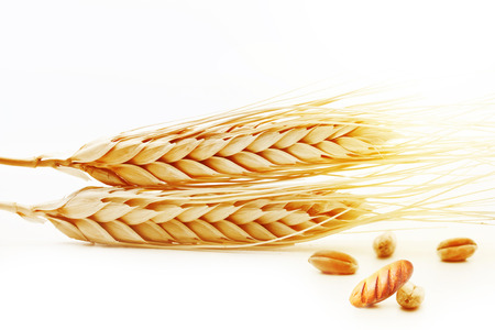 Ears of wheat with grain and fresh bread isolated on white background