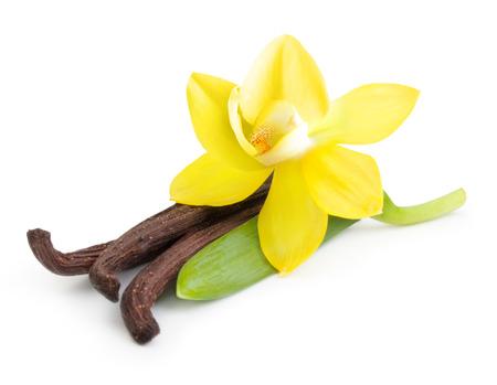 바닐라 포드와 난초 꽃은 흰색 배경에 고립