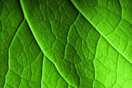 Hoja verde de fondo macro. Foto de archivo - 32040505