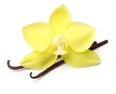 flores exoticas: Vainas de la vainilla y flor de la orquídea aislado en fondo blanco Foto de archivo