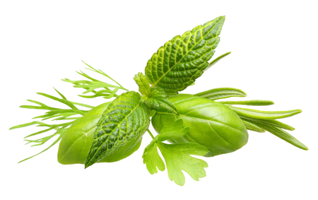 basil herb: Herbs. Basil leaves, dill herb, rosemary spice, mint isolated on white background. Stock Photo