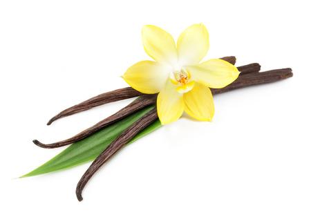 바닐라 포드와 난초 꽃 흰색 배경에 고립