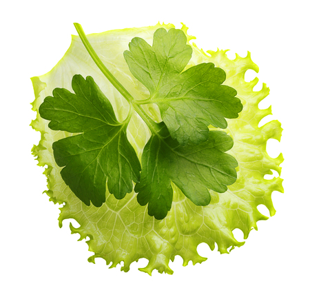 Lettuce leaf and parsley herb isolated on white background. Stock Photo