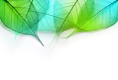 Macro green leaves texture background. Foliage decoration pattern.