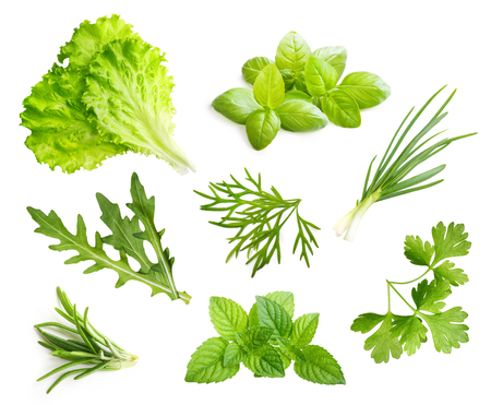 relish: Parsley herb, basil leaves, dill, rosemary spice isolated on white background. Stock Photo
