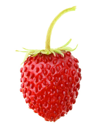 'wild strawberry: Wild strawberry macro isolated on white Stock Photo