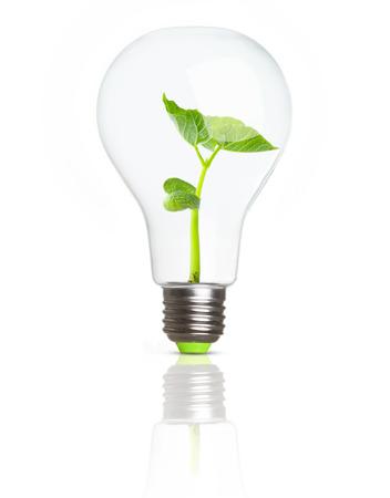 crecimiento planta: Planta verde en el suelo dentro de la bombilla. Eco concepto.