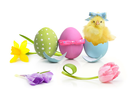 decorated: Easter colorful eggs, flowers and cute little chicken isolated on white background