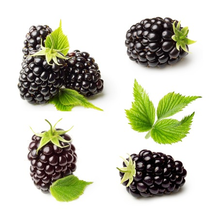 Blackberry isolated on white background 版權商用圖片