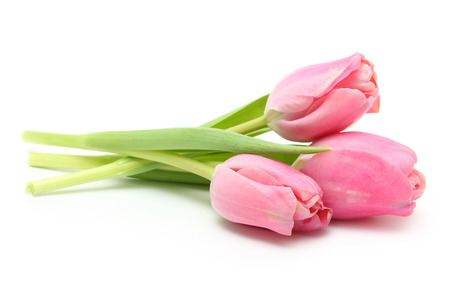 bouquets: Spring flower pink tulips bouquet isolated on white background.
