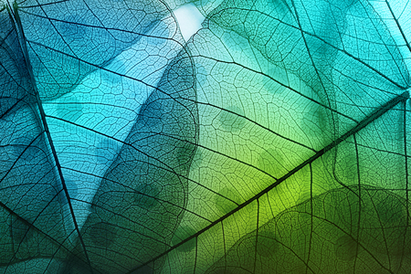 Macro leaves background texture over spotted background. 免版税图像