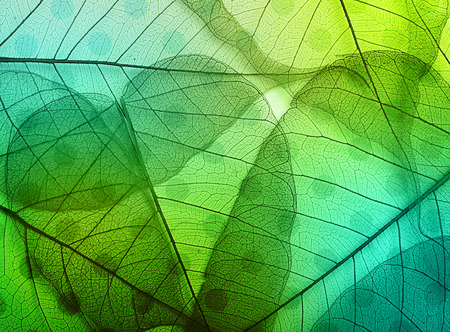 Macro leaves background texture over spotted background. 写真素材
