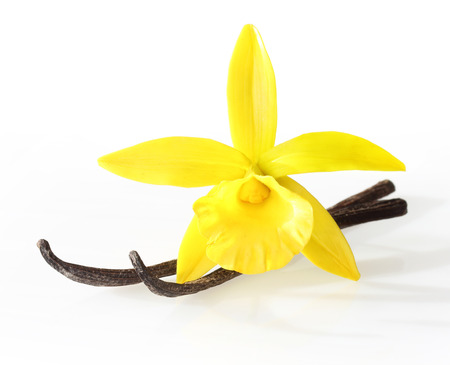 asian flavors: Vanilla pods and orchid flower isolated on white background