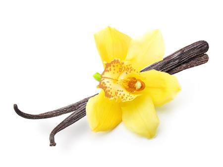 isolated flower: Vanilla pods and orchid flower isolated on white background