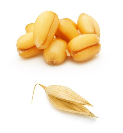 avena: Trigo y avena grano aislado en el fondo blanco