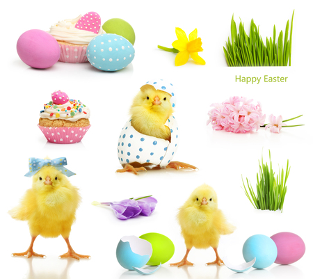 decorated: Cute little chicken and Easter eggs isolated on white background Stock Photo
