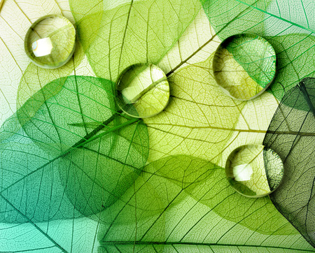 Zielony liść makro kroplami wody