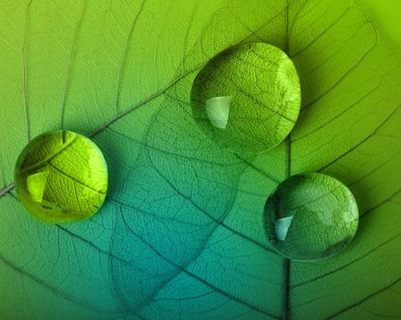 Green leaf macro with water drops Stock fotó