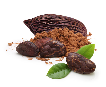 카카오 콩 및 흰색 배경에 고립 된 파우더