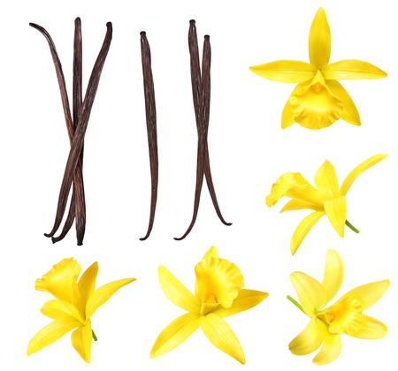 Vanilla pods and flower isolated on white background Stockfoto