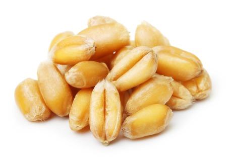 Wheat grain isolated on white background Standard-Bild