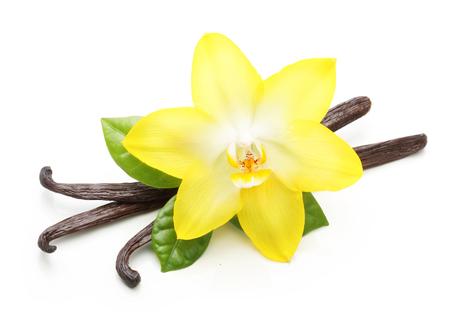 Vainas de la vainilla y flor de la orquídea aislada en el fondo blanco Foto de archivo