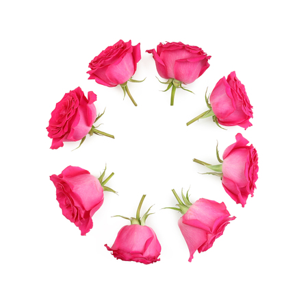 Single pink rose flower set