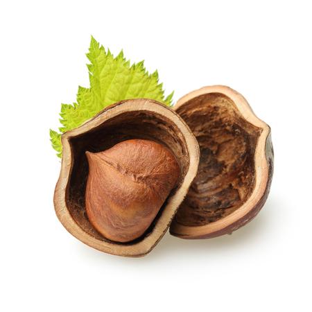 Bosnoten geïsoleerde hazelnoten