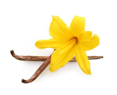 Vainas de vainilla y flores de orquídeas aisladas