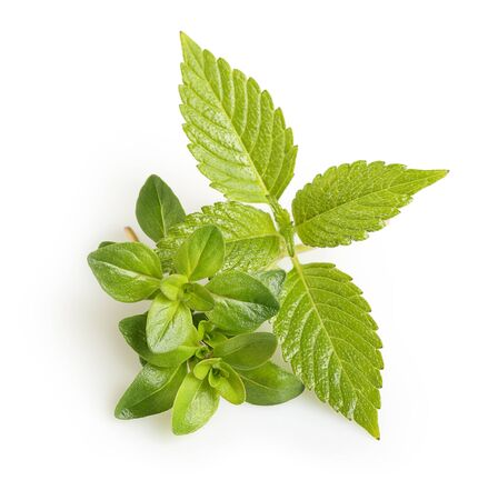 Thyme fresh herb and mint isolated Imagens