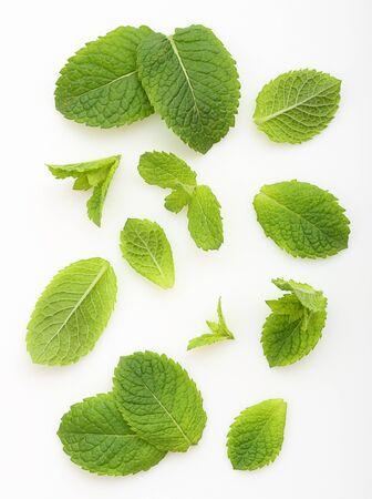 Foglie di menta verde isolate