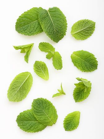 Green mint leaves isolated Фото со стока