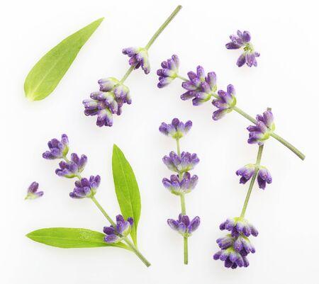 Flower violet lavender herb isolated on white Imagens
