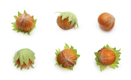Set of nuts hazelnuts isolated on white