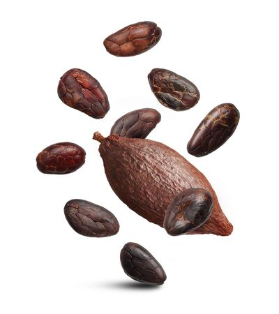 Cacao beans isolated on white