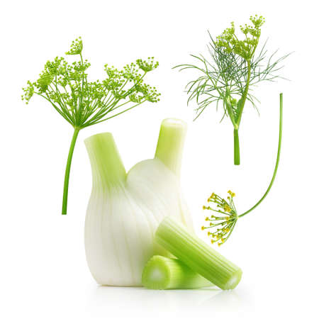 Fresh fennel bulb with leaves Imagens