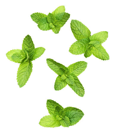 Green mint leaves isolated on white 版權商用圖片