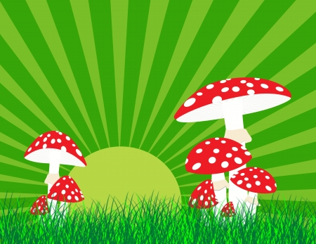Red mushroom on grass at sunset, vector illustration Illustration