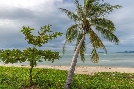Beautiful Palms on the beach, Dominican republic 스톡 콘텐츠